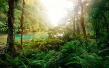 美しい階段状の神秘の湖が見れる!グアテマラの秘境『セムクチャンペイ』