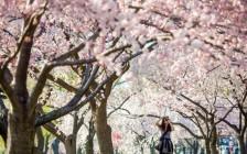 日本を思い出す世界の風景