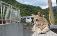 台湾の「侯哃(ホウトン)」