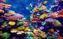 デートで行きたい!壮大でロマンティックな世界の水族館7選