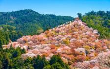 鹿と自然と景色が魅力!奈良県の絶景6選