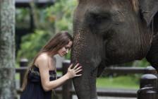一家に一人はほしい!ラオスで「象使い」になるための方法とは!?