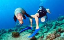 """人と動物が共存する楽園「ガラパゴス諸島」!その魅力はただ""""可愛い""""だけじゃなかった!"""