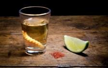 世界のマニアックなお酒7選!勇気ある旅人は「イモムシ」や「サソリ」漬けをご賞味あれ