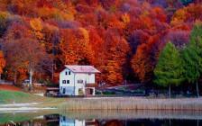 世界の紅葉も息をのむほど美しかった