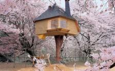 日本にある宿泊できるツリーハウス23選