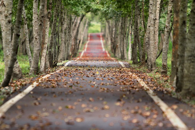 woodland-656969_1280