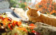 尾道で猫をかわいく撮影する7つのコツ