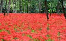 埼玉観光でおすすめの絶景スポット17選