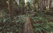 レッドウッド国立及び州立公園