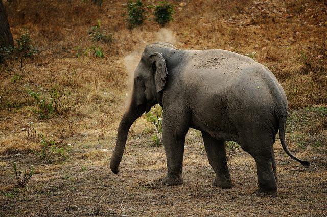 トゥンヤイ-ファイ・カ・ケン野生生物保護区群