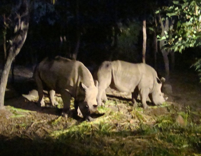 20150925_night_Chiang_Mai_Night_Safari