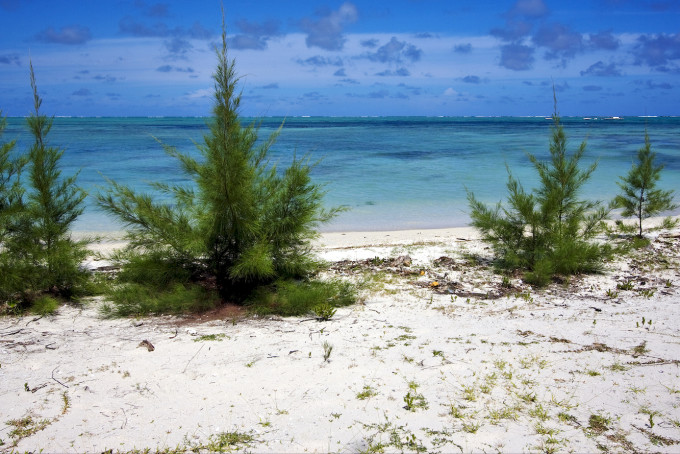 ile du cerfs in mauritius, a beach ND BUSH