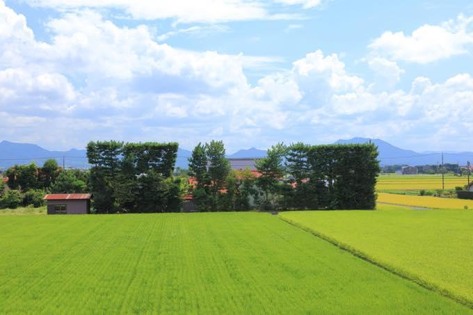 出雲平野の築地松(斐川町)