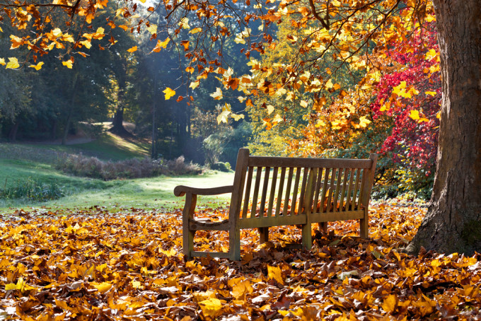 紅葉がとても美しい公園のベンチ