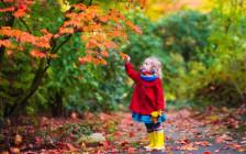 紅葉や秋を表現する英語フレーズ18選