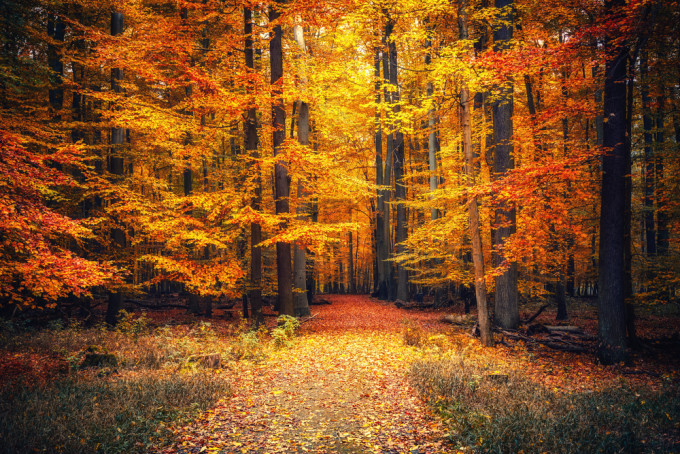 紅葉が美しすぎる森の中
