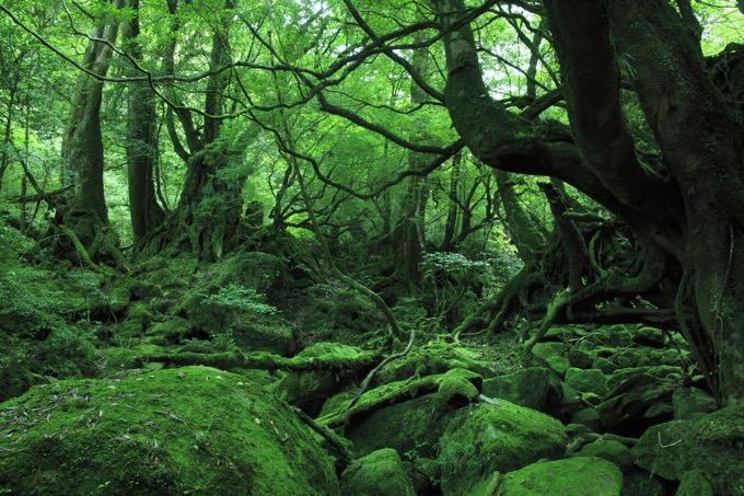 屋久島(鹿児島)