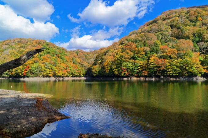 青森県・秋田県の白神山地