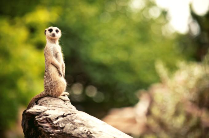 メルボルンでデートするならメルボルン動物園