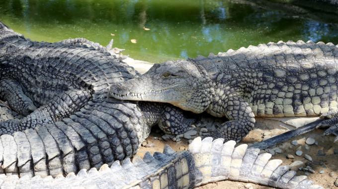 パラワン島野生生物保護センター