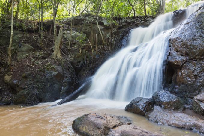 カウラ森林保護区