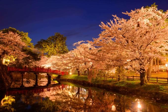 青森県弘前公園の桜並木