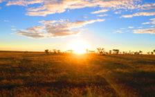 行き当たりばったりでタンザニアへ!サファリをオススメする7つの理由