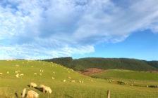 ニュージーランドをレンタカーで旅する!北島のおすすめ観光ルート
