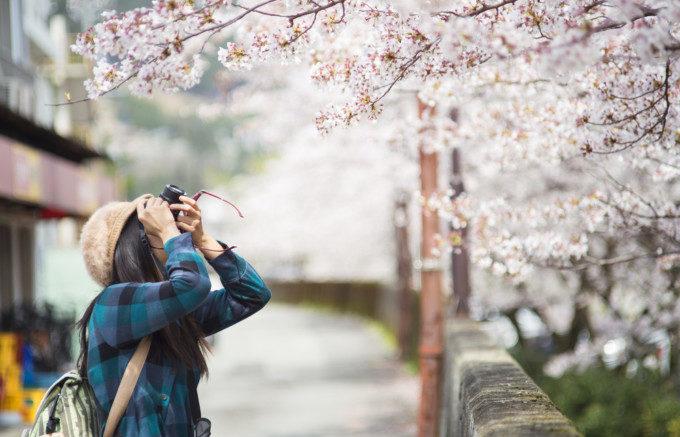 桜と女の子とカメラ