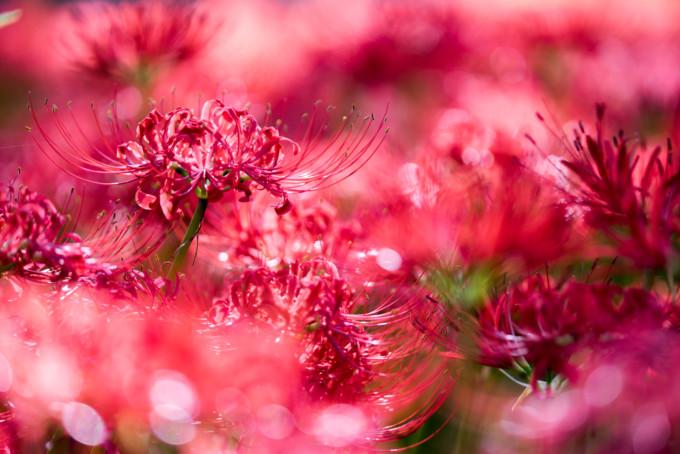 日高(埼玉)にある美しい花