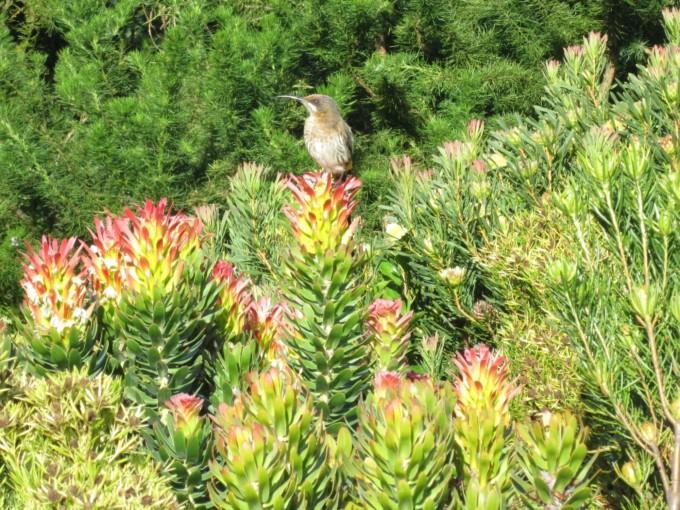 カーステンボッシュ国立植物園