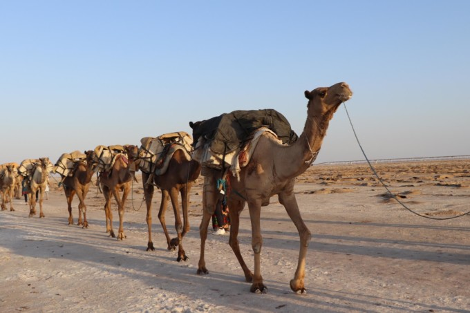 砂漠を歩くラクダ