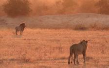 南アフリカ最大のクルーガー国立公園でキャンプ!スククーザで自然をめいっぱい感じてみる?