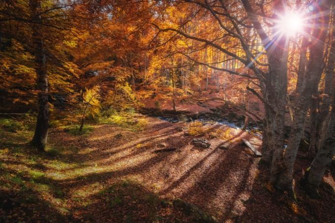 紅葉のとても美しい公園
