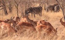 まさに動物パラダイス!野生動物を見るなら南アフリカ共和国へ飛ぶべき