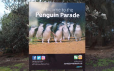 世界最小!オーストラリアのメルボルンで「リトルペンギンパレード」を見に行こう