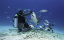 人喰い鮫10匹に囲まれる!メキシコのプラヤデルカルメンで「ブルシャークダイビング」に挑戦