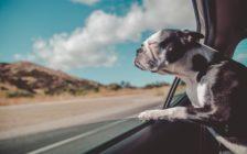 「旅人向き」の3つの才能と仕事で活かす方法
