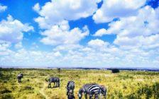 五つ星のカタール航空ドーハ経由でアフリカに行きたい♡魅力あふれる都市8選