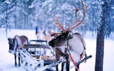フィンランド鉄道のホームページからチケットを購入する方法