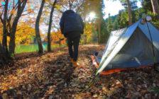 「旅に行く時間がない」あなたへ。休日に自然を満喫するキャンプのススメ