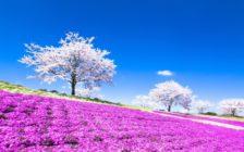 女子旅日帰りにおすすめの関東の観光スポット7選