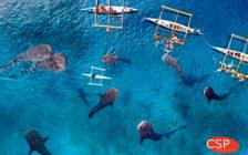ジンベイザメが目の前に! 週末に行けるエキサイティングなセブ島女子旅が超話題