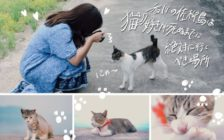 香川の佐柳島は猫好きが死ぬまでに絶対に行くべき場所
