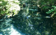 美しすぎる自然は変わらない。熊本県民が伝授する阿蘇のおすすめスポット12選