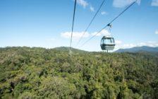 ケアンズに来たならマストで訪れたい!世界最古の熱帯雨林キュランダ
