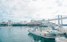 小田原漁港(早川漁港)は隠れた人気スポット!朝市の開催日や周辺観光スポットは?