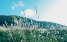 箱根の名所・仙石原へ!ススキの絶景やミュージアムを楽しもう