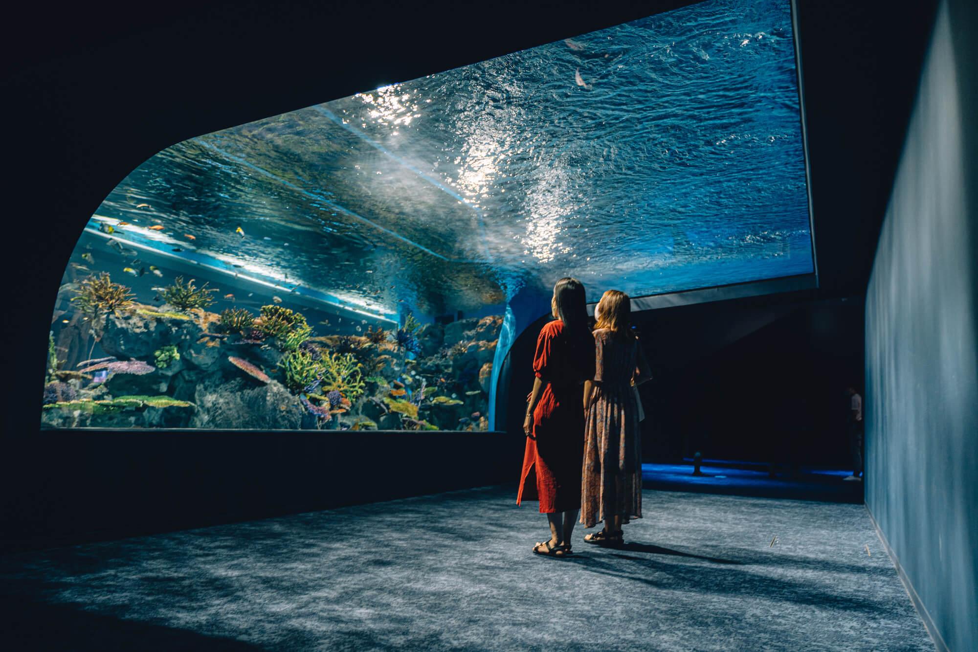 沖縄の水族館 DMMかりゆし水族館